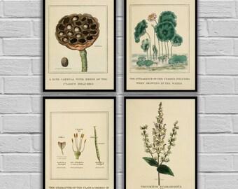 Vintage Botanical Prints - Set of 4 - Print or Canvas - Antique Plant Prints - Botanical Wall Art - Botanical Prints Set of 4 - 172 - 175