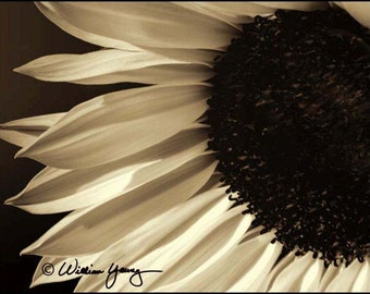 Sepia Sunflower (5983)