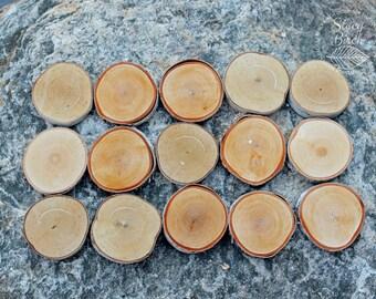 15 White Birch Disks