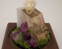 Bat Skull Crystal/Mineral Terrarium - Calcite - Amethyst - Selenite - Glass Dome - Animal Bone Display - Curiosity - Oddity - Specimen
