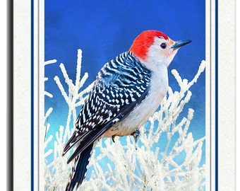 Photo Greeting Card, Red Bellied Woodpecker, Handmade Card, All Occasion Card, Winter Frost, 5x7 Blank Card, Fine Art Print, Photo Note Card