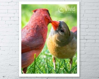 Lovebirds, cardinal birds, cute wall art, gift for her, couple kissing, art gift for girl, cardinal photo, framed art, nature photography