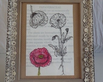 Botanical drawing. poppy. Flower drawing