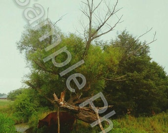 8x10 Inch Artistic Photography Print - A Rainy Day