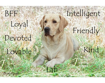 Yellow Lab Traits, Yellow Lab Metal Art Print, Yellow Lab Gift, Yellow Lab, Labrador Retriever