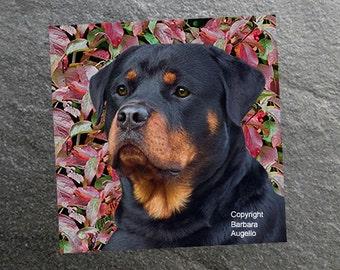 Rottweiler, Rottweiler Coasters, Rottweiler Gift, Rottweiler Art