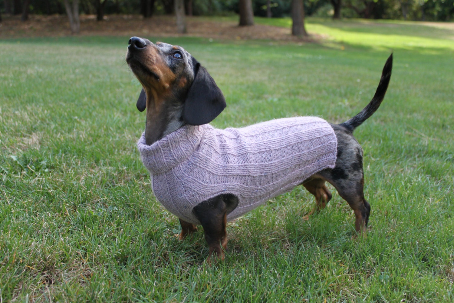 Knitting Patterns For Dachshund Dog Sweaters : Knitting Pattern Top-Down Mini Dachshund Dog Sweater