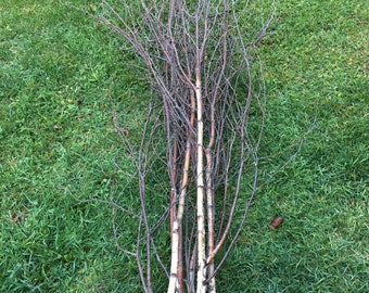 Five White Birch Branched Tops