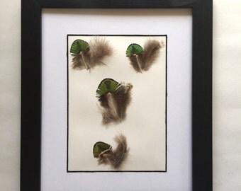 Natural Feather Framed. Green Gold Feather Framed. Iridescent Green Gold Peacock Feather. Feather Art.