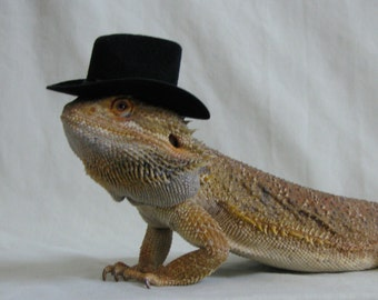 Hats for your Bearded Dragon, Snakes, & Small Pets! Different styles, multiple sizes.