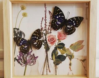 Framed real Sasakia Charonda Coreana butterflies on floral mount (large)