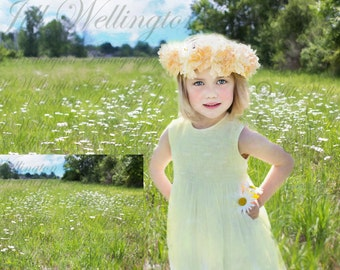 DIGITAL Daisy Field background, backdrop, spring, summer, for photographers, photography