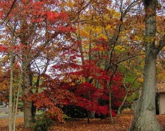 Digital Photography, Changing Forest, Autumn, 2015, Season Change, 5x7, 8.5x11, 11x14, Fine Arts