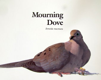 Vintage 1970s Bird Book Print - Mourning Dove Illustration - Gifts - Home Decor