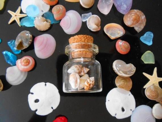 25 tiny nassa shells mud snail shells dog whelk shell for Tiny shells for crafts