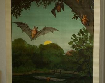 Vintage  Pull Down Chart  Bat School Chart