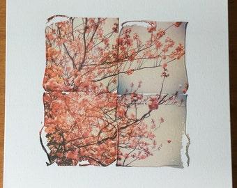 Original polaroid photography emulsion lift on canvas