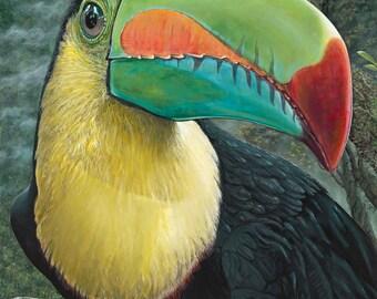 Kell Billed Toucan