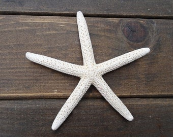"4"" - 7"" Star Fish- Real White Finger Starfish-Crafting-Nautical Beach Home Decor,Large Opening Plant Terrarium Accessories Indoor Dedor"