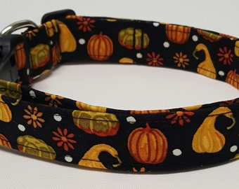 dog collar, gourds, fall dog collar, fall collar, halloween dog collar, halloween collar, pumpkins, pumpkin dog collar, pumpkin collar
