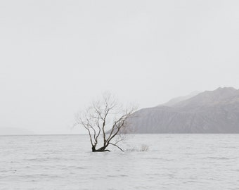 Lone tree growing in Wanaka Lake New Zealand, fine art photography print, wall art