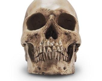 Skull Replica 1:1, handmade
