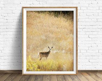"wildlife, woodland, deer, nature, photography, instant download art, printable art, large art, large wall art, print, art - ""Standing Still"""