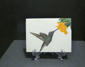 Feeding Hummingbird 'Art Card' - white background