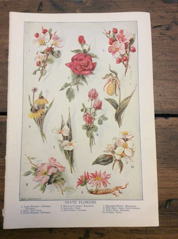 Antique Print, Botanical, State Flowers, Book Plate, Lithograph (B022)