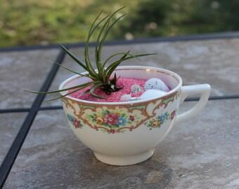 Vintage Tea Cup Terrarium with Air Plant