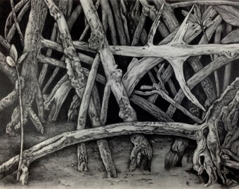 MangroveIV ~ Drawing by Dawn Rosendahl ~Original Pencil Drawing~