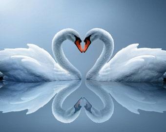 Swan Love Heart