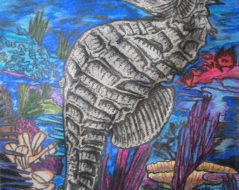 sea creature series more & more
