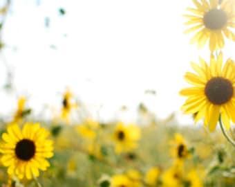 "Summer Sunflowers; original photography printed on 1/2"" maple, wall decor"