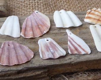 Pieces of Scollop Shell in Fan Shapes