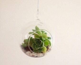 Mini Terrarium - succulents and pebbles