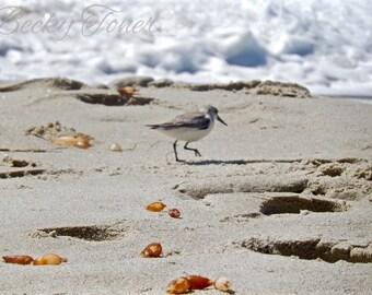 Canvas sand piper