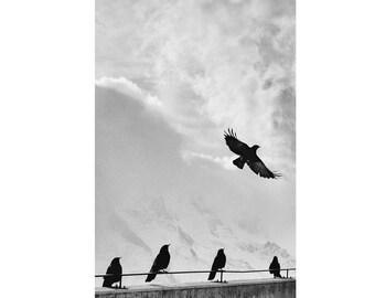 Crows Digital Photo - Crows Photo - Birds Photo - Black and White - Vertical Photo - Digital Photo - Digital Download - Living Room Decor