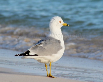 beach photography ocean photography beachy photography seagull photography nature photography bird photography nautical photography