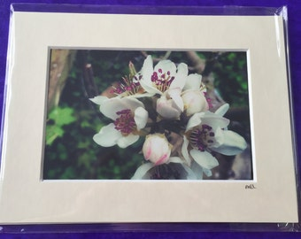 Mounted Apple Blossom Photo