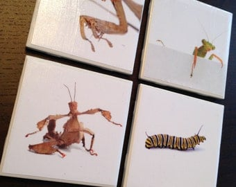Praying Mantis and More Coasters