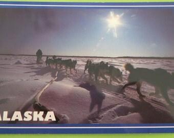 Artick Alaska Sled Dog Team Postcard