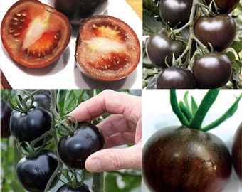 20PCS Rare Seeds Tomato Black Cherry Russian Heirloom Vegetable Seed