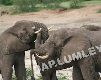 ELEPHANT TANGLE