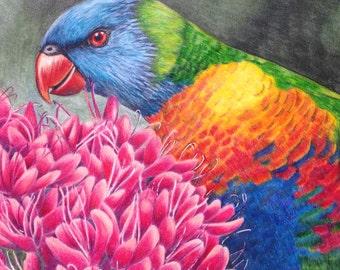 Rainbow lorikeet. ORIGINAL  colour pencil drawing