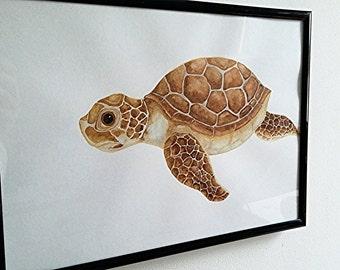 Baby turtle - Children's original illustration.