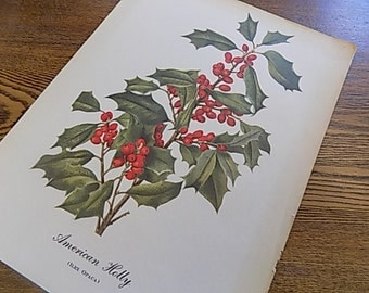 Wildflower Print - Amercian Holly - Vintage Prints