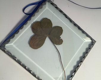 5 leaf clover in bevel glass 5L3
