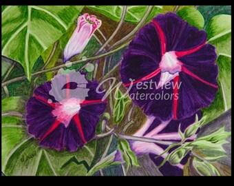 Morning Glory Beauties: 9x12 print of an original watercolor painting