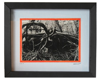 Roots (Nature Series) - Print 3